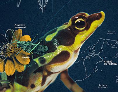 Identidad Visual Centro Interactivo del Canal de Panamá
