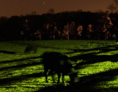 Grazing at Night