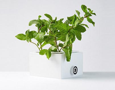 PLANTY SQUARE