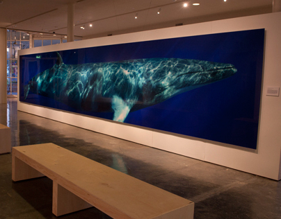 """""""Beautiful Whale"""" At the Museum of Monterey"""