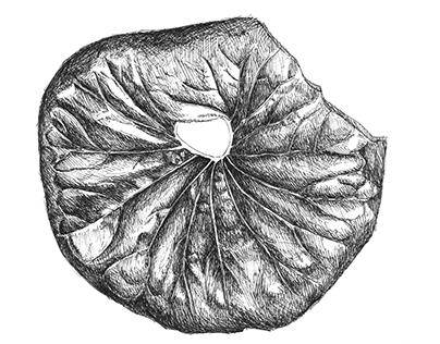 ilikeplantsandflowers