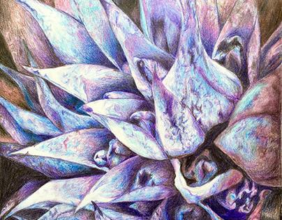 Illustrations: Plants