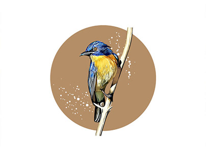 Blue Flycatcher Bird Vector Illustration