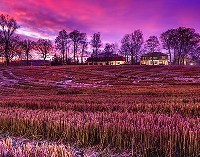 Purple in color