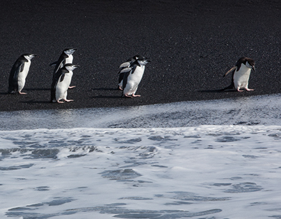 Antarctica - Wildlife