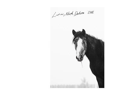 Nokota Horse Conservancy, Linton North Dakota