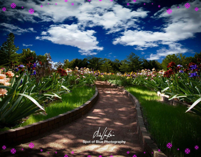 Path of flowers