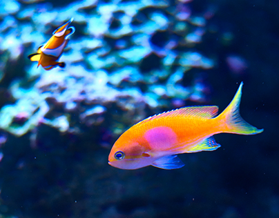 Color Design of Tropical Fish