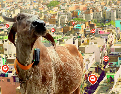 Videocon, The Traffic Gaaye (Cow)