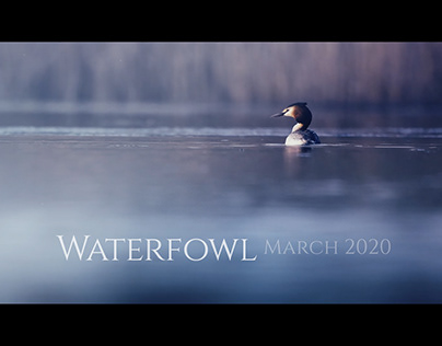 WATERFOWL MARCH 2020