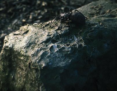 '' Spider in Nature ''