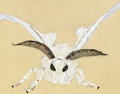 Bombyx mori, the domestic silkmoth