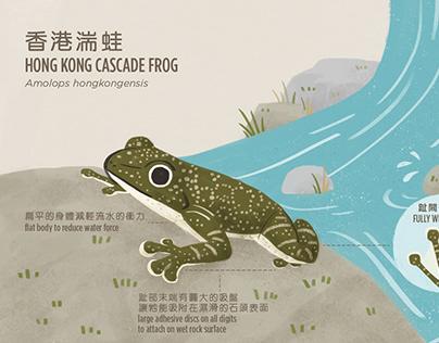 HONG KONG CASCADE FROG