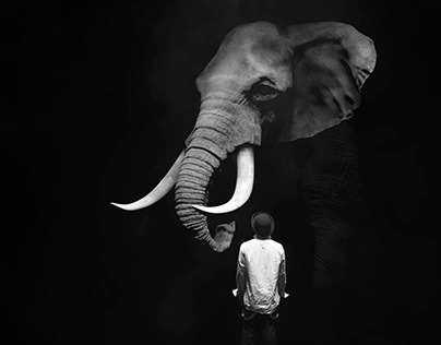 The Dog and The Elephant, Studio Film