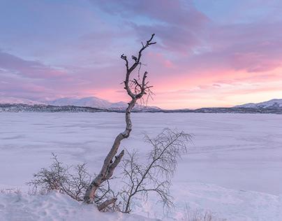 250 kilometers north the Arctic Circle