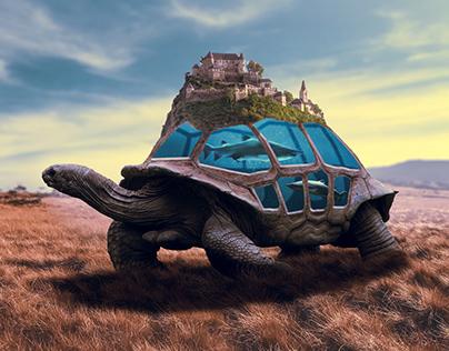 Turtle & Aquarium