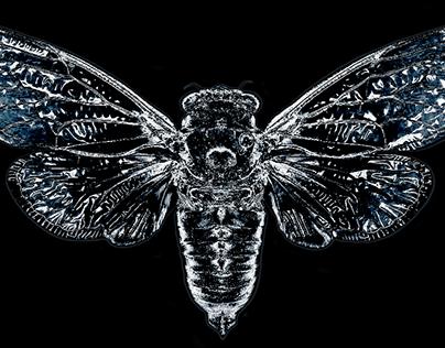 Frozen Cicada