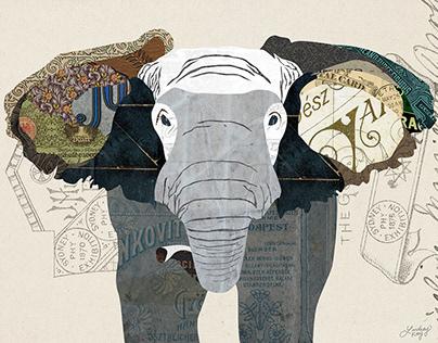 Digital Collage | Animals