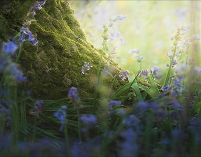 Bluebells - Spring in Germany