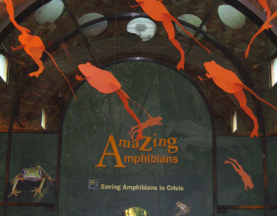 Bronx Zoo Amazing Amphibians Exhibit