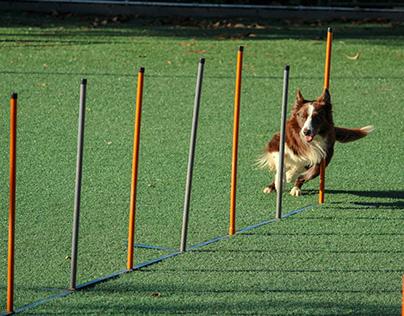 Two Simple Dog Training Methods
