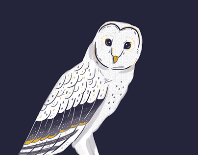 Barn Owl Animation
