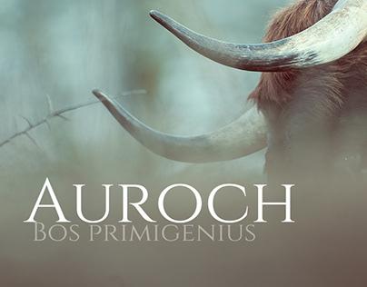 Auroch ( Bos primigenius )