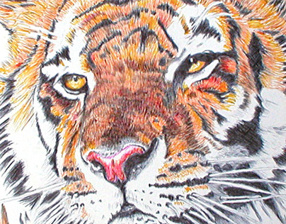 Tiger - Ball Point Pen Drawing by K. Fairbanks