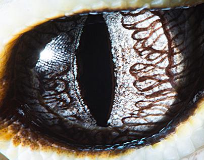 Animal eyes 2