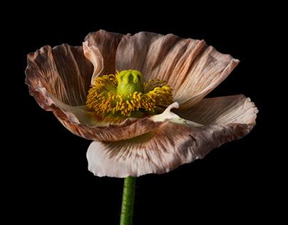 Low key flower photography