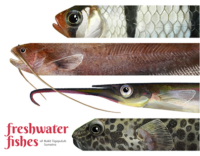 Freshwater Fishes of Bukit Tigapuluh