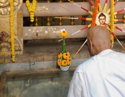 El arbol perdido de Buda/The lost tree of Buddha
