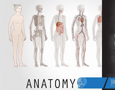 Human Body Anatomy -Systems -Internal Organs -Skeleton