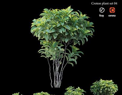 Corton plant set 04