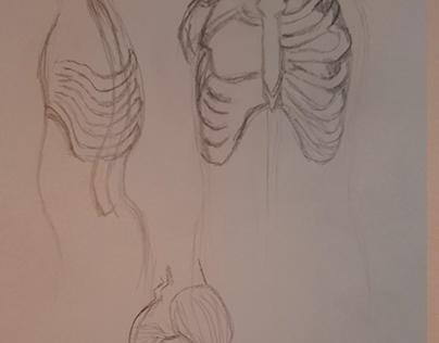 torso/torso