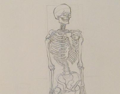 Skeletal Studies - 2014