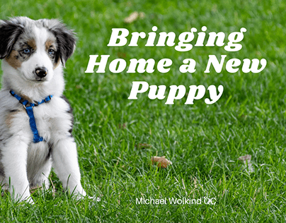 Bringing Home a New Puppy