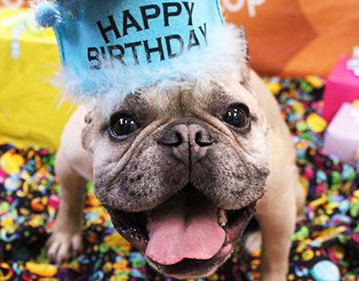 Dogtopia Birthday Photos 2017-2019