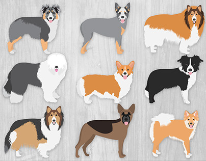 Herding Dogs Illustration Collection