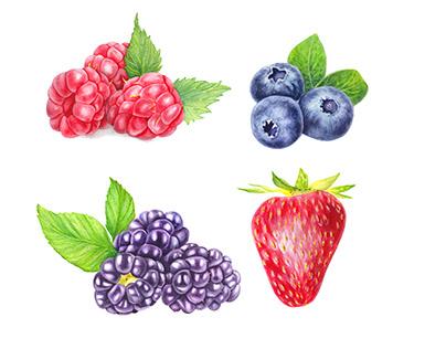 Watercolor berries.