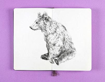Sketchbook Insights