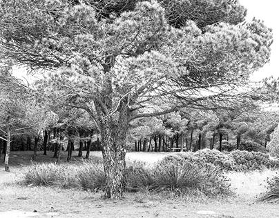 Pineta in Sardegna