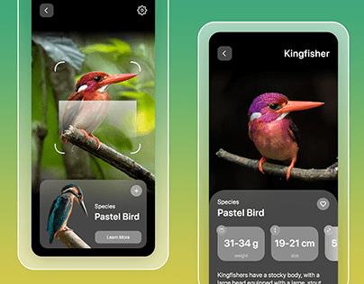 Bird Search App UI | with AR Scan