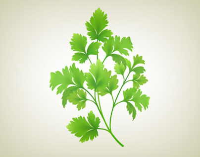 Vector parsley and dill