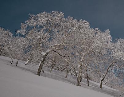 Sunny winter day on Hokkaido snow