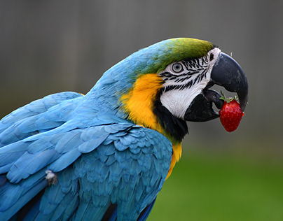 Flying Free macaw
