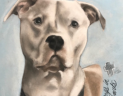 Pastel: Collection- Dog Portraits