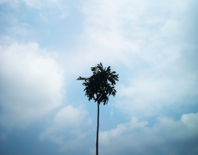 Loud Trees- Photography