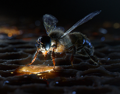 Bee on the honeycomb