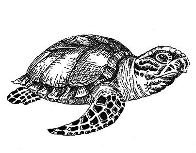 Ilustración naturalista. Revista Artes de México.
